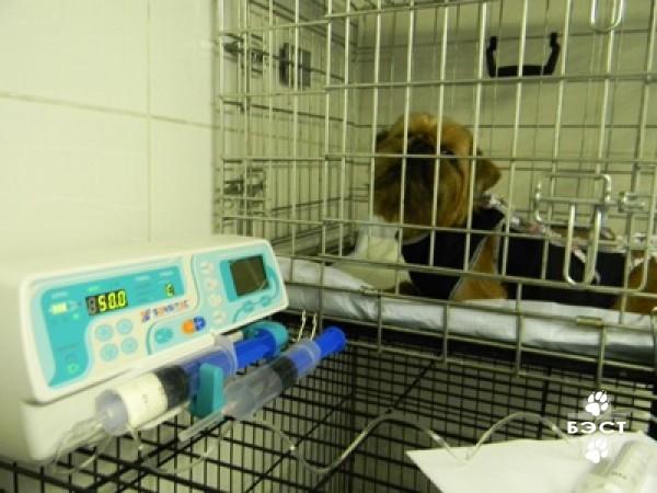 В ближайшее время планируется создание банка спермы собак, искусственное ос