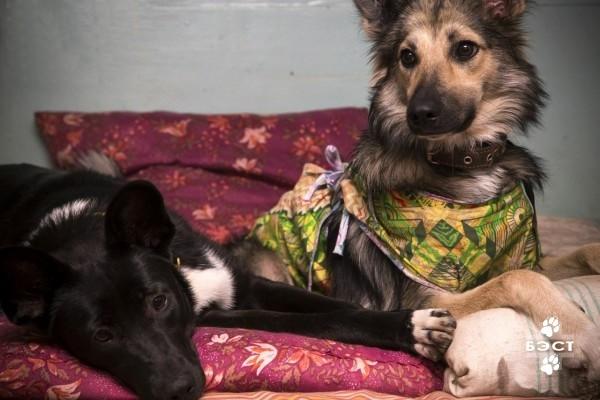 стерилизация собак беларусь доктор вет