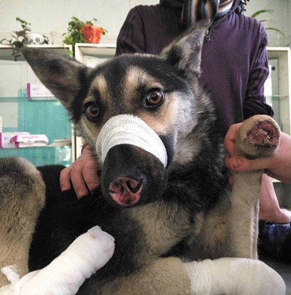 Истории болезни | Ветеринарная клиника БЭСТ в Новосибирске