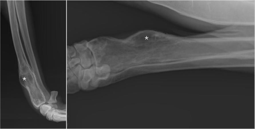 Опухрль плечевого сустава у собаки иммобилизация при повреждении тазобедренного сустава